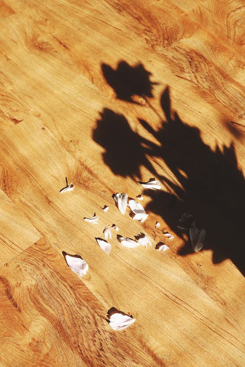 Brown and White Bird on Brown Wooden Floor