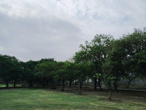 Foto profissional grátis de amarelo, área, árvore, árvores
