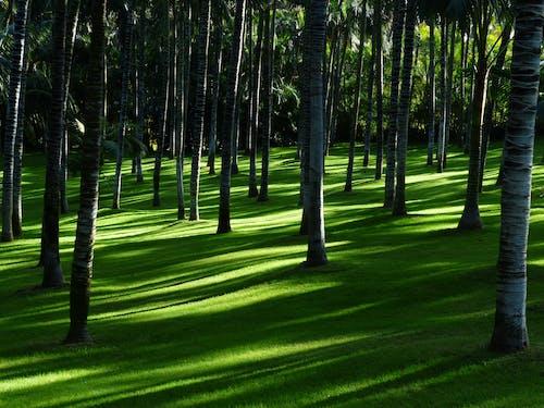 Foto d'estoc gratuïta de arbres, fons de pantalla de Samsung, Fons de pantalla HD, herba