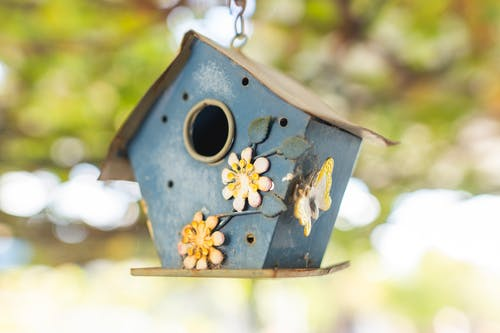 Blue Wooden Bird House on Tree Branch