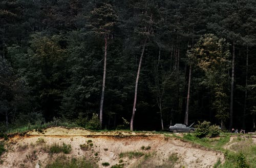 Free stock photo of barbeque, car, forest, trees
