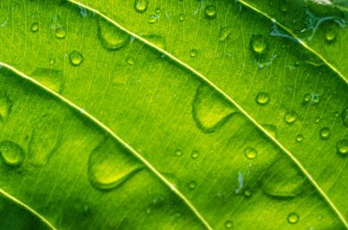 Free stock photo of aftre rain, background, dew, green