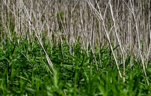 Free stock photo of dry, grass, growing, new