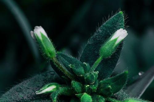 Free stock photo of closeup, flower, flowers, grenn