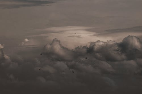 Free stock photo of birds, clouds, flying, sky