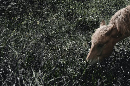 Free stock photo of eating, grass, head, horse