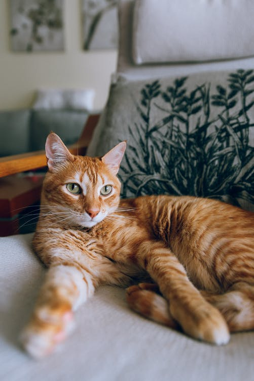 Orange Tabby Cat Lying on Chair