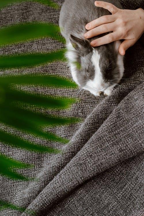 White and Gray Rabbit on Gray Textile
