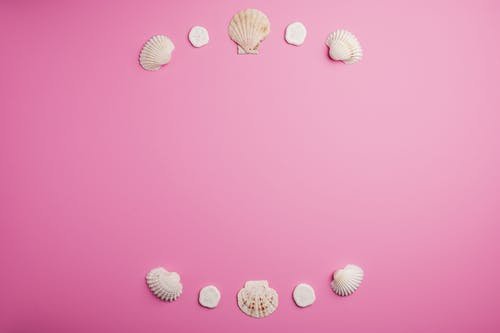 Composition of seashells on pink background