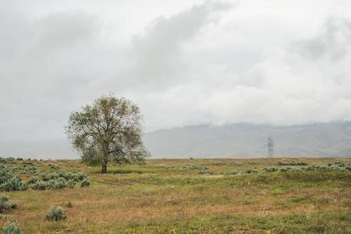 Immagine gratuita di aereo, agricoltura, albero
