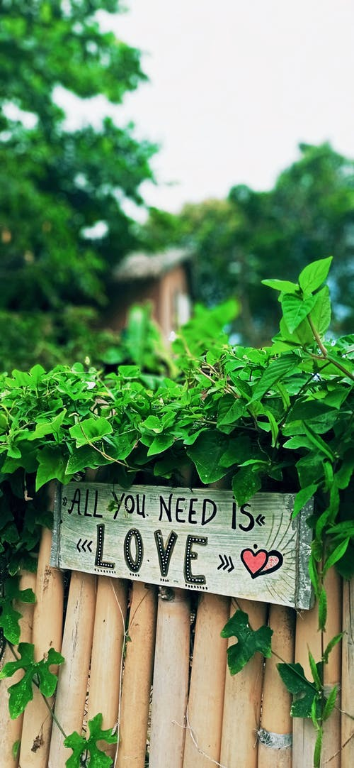 Free stock photo of all you need is love, Bamboo fence, sign