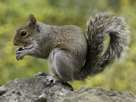 Photo of Squirrel Holding Nut During Daytime