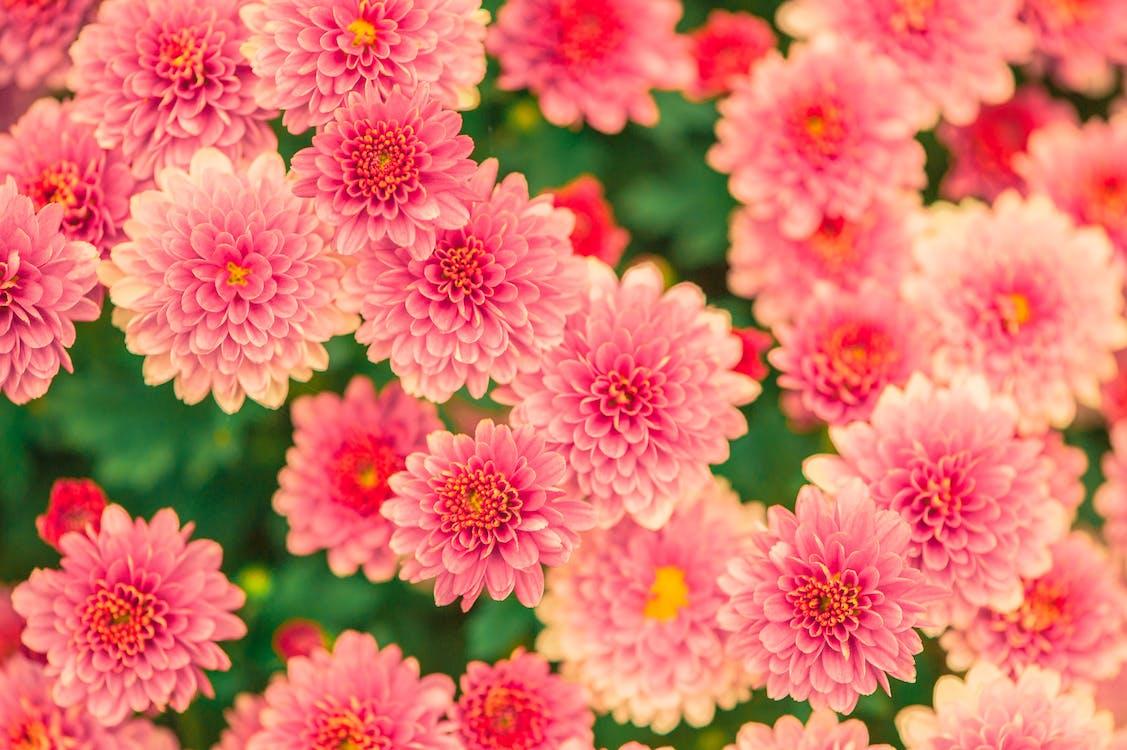 bagus, berkembang, bunga