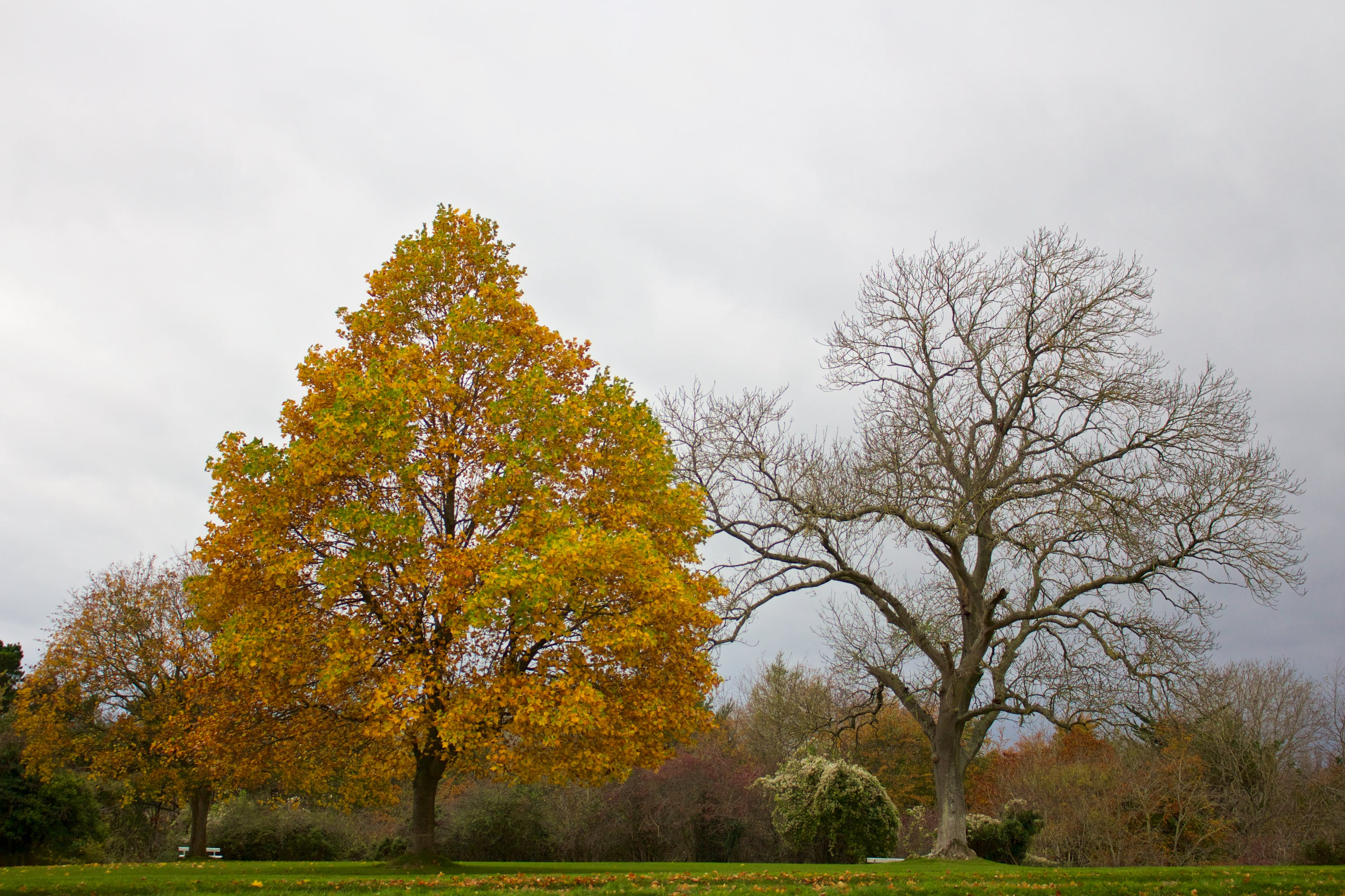 Green and Brown Tree Under Gray Sky