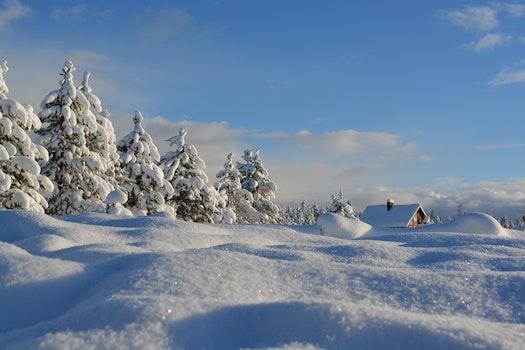 Kostenloses Stock Foto zu schnee, himmel, bäume, winter