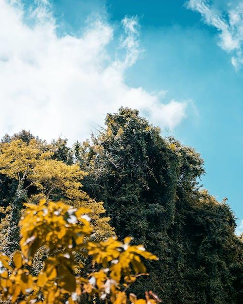 Бесплатное стоковое фото с дерево, за городом, золотистый, золото