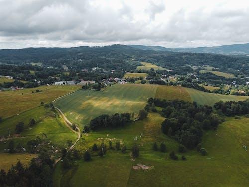 Free stock photo of farm, field, grass