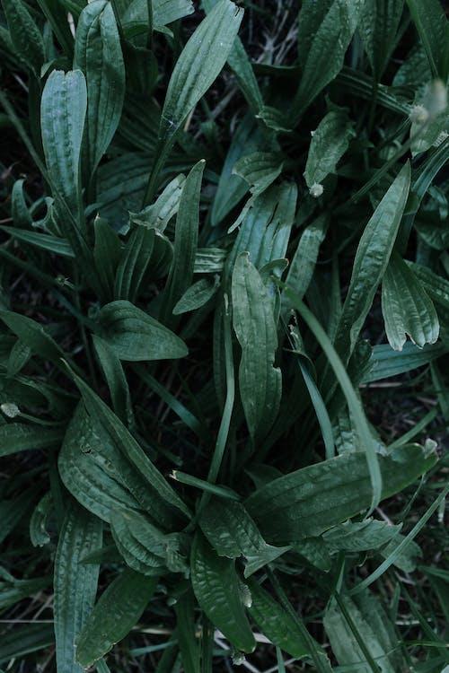 abstrait, botanique, centrale