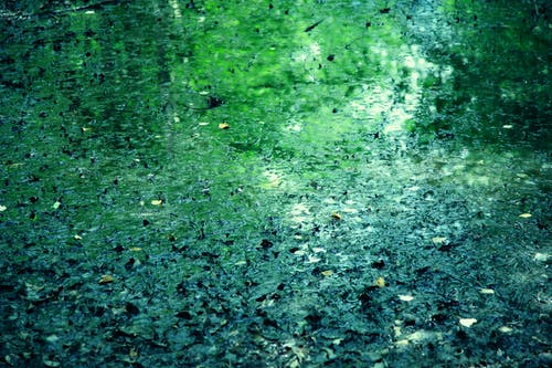 คลังภาพถ่ายฟรี ของ กบ, การสะท้อน, ที่ลุ่มน้ำขัง