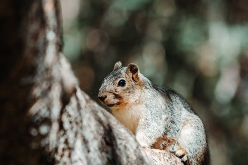 Photos gratuites de adorable, amusant, animal, arbre