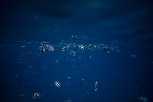 Gratis stockfoto met diep, dieren in het wild, duiken, educatie