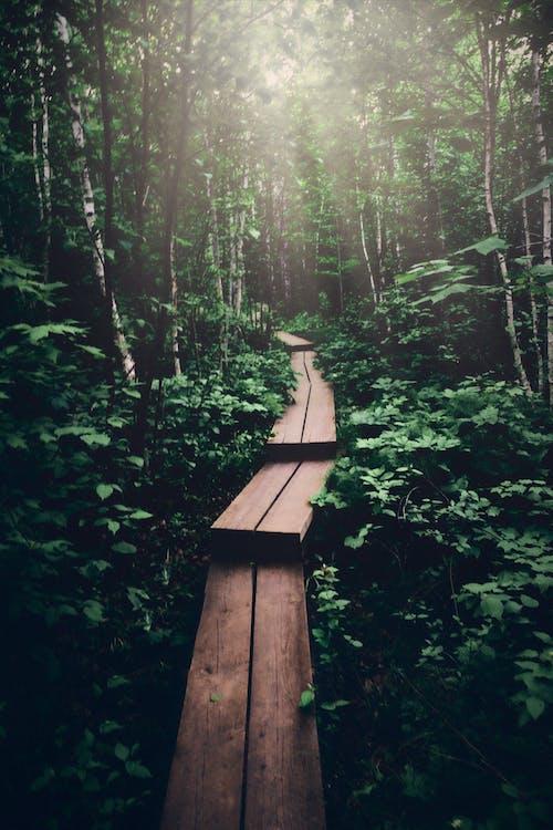 Immagine gratuita di acqua, alba, albero, avventura
