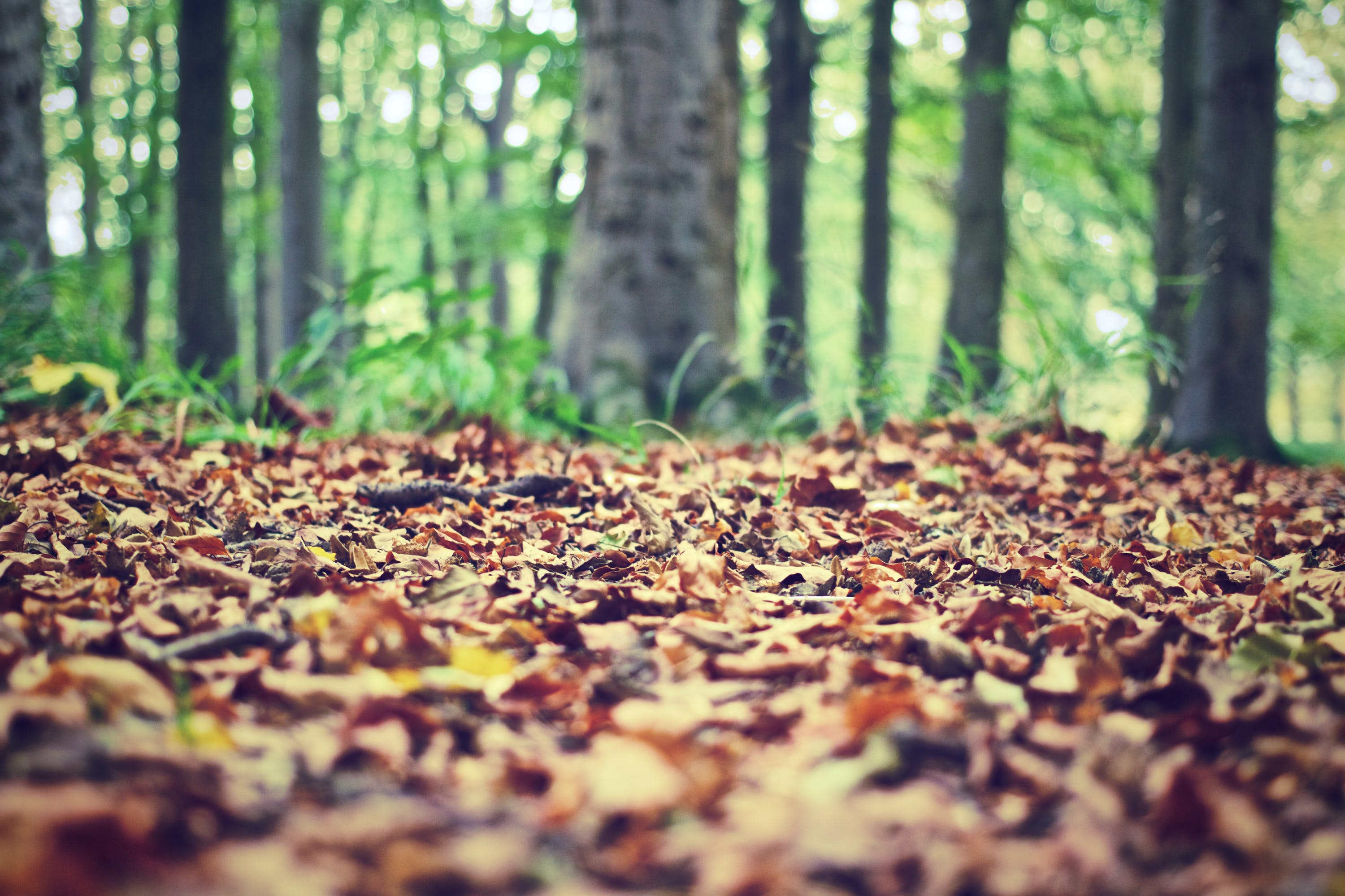 Free stock photo of nature, forest, leaves, ground