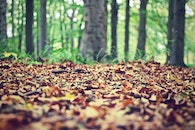 nature, forest, leaves