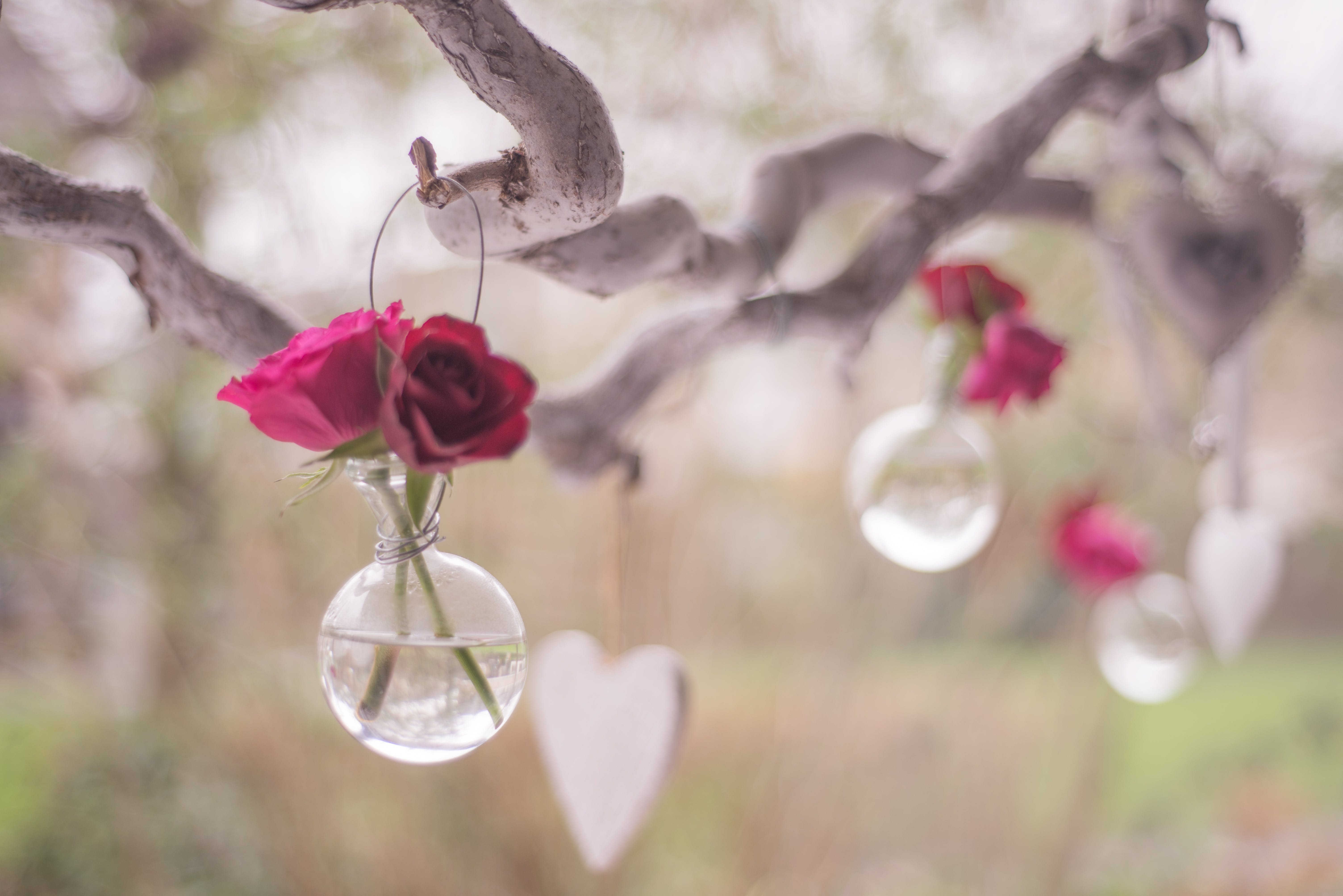 Shallow Focus Photography of Clear Glass Hanging Decor With Two Red Roses