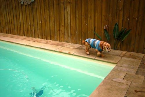 Free stock photo of dog, pool, wet