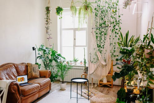 Creative design of room with laptop on leather sofa and collection of greenery plants in pots near shiny window