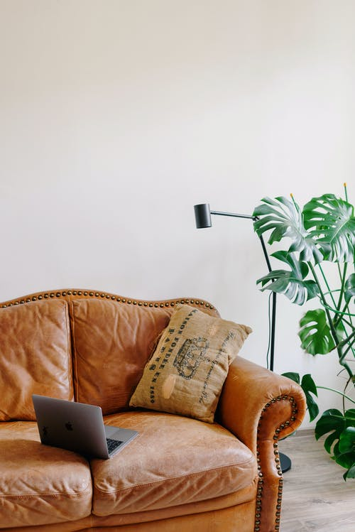 Cozy sofa with laptop near green plant at home