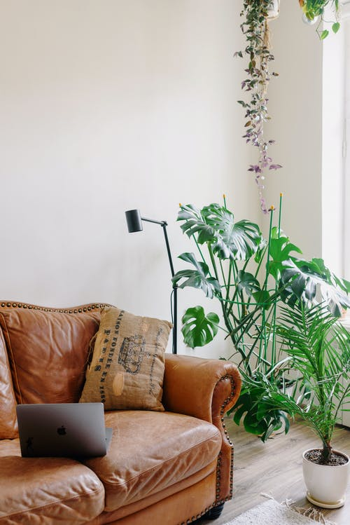 Modern room interior with couch and laptop near potted plants