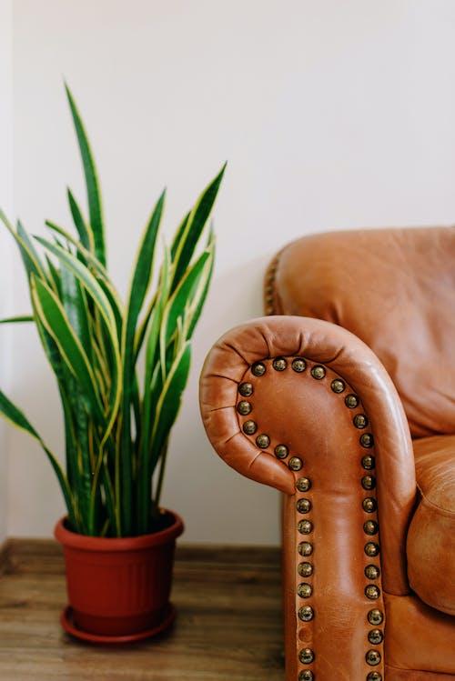 Imagine de stoc gratuită din acasă, armonie, aspect