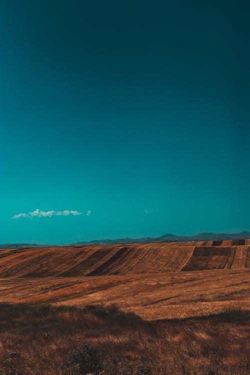 Brown Field Under Blue Sky