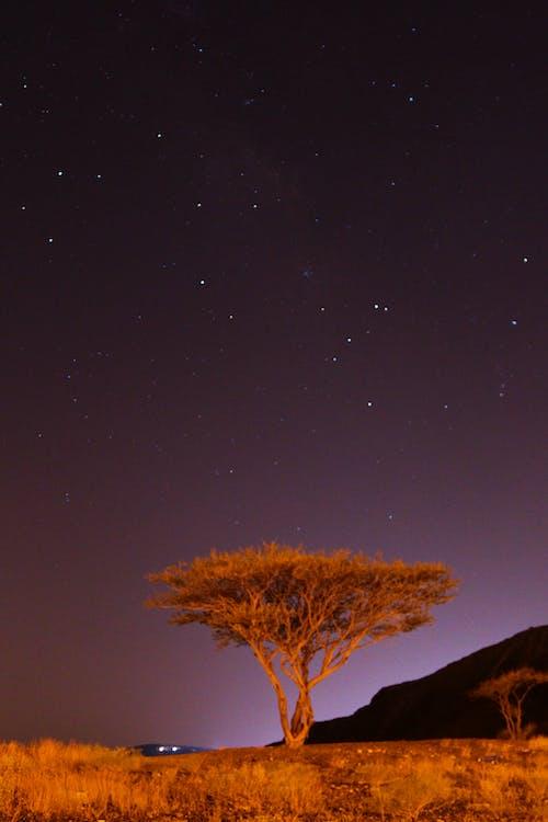 Free stock photo of ghaf, ghaf tree, night, uae