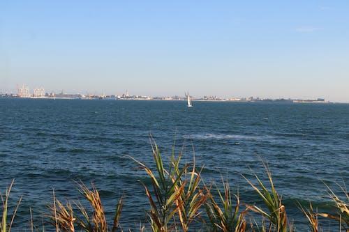 Fotos de stock gratuitas de bahia, embarcaciones, mar, veleros