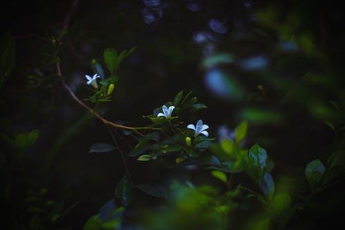 Kostnadsfri bild av blekna, blomma, blomning, dimma