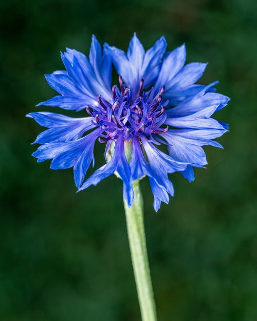 Blue flower growing in field