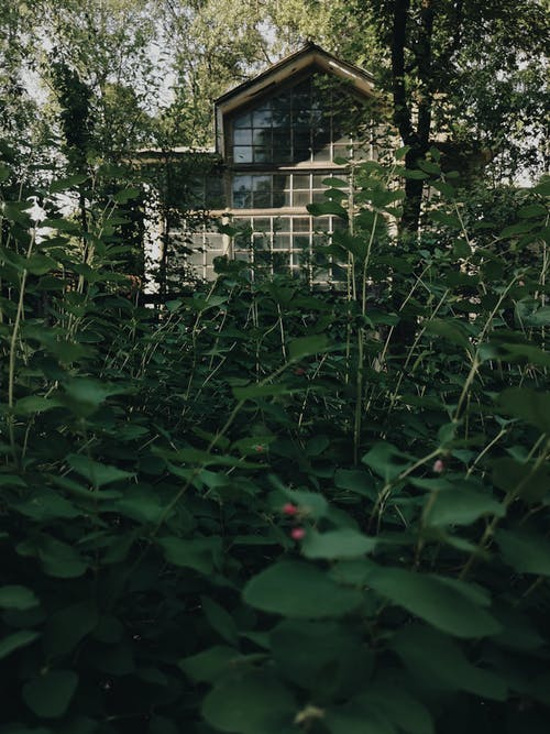 Cottage with lush green plants