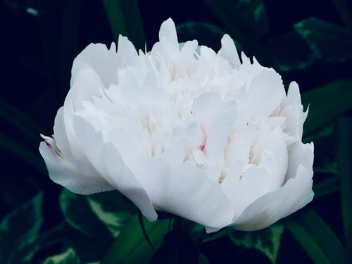 晚上花景, 特寫 的 免費圖庫相片