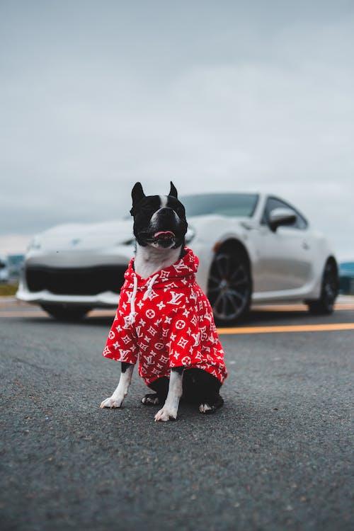 Cute dog sitting on asphalt road