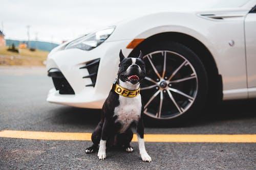 Cute dog sitting near car