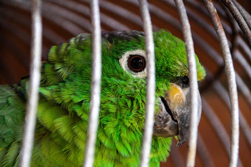 Free stock photo of animal, bird, cage, green