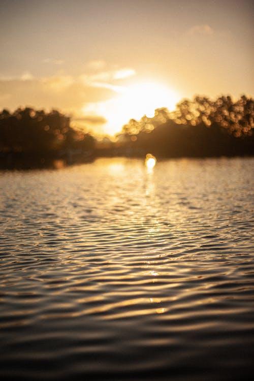 Free stock photo of mangrove, ocean, sun, sunrise