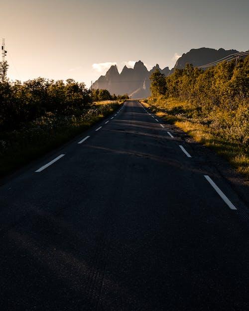 가벼운, 가을, 거리, 경치의 무료 스톡 사진