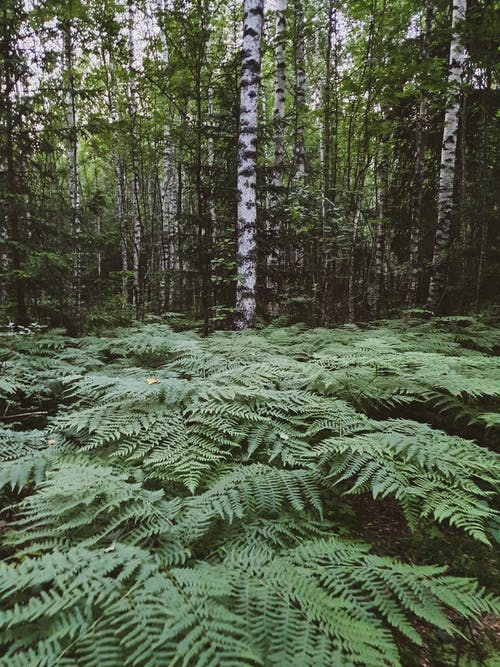 Green Fern Plants and Trees