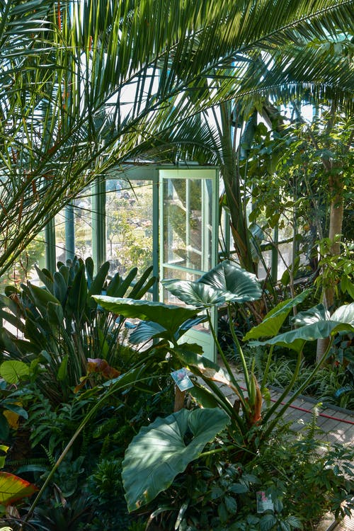 Green Plants Near White Wooden Framed Glass Window