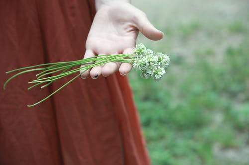Person Holding White Flower Bouquet