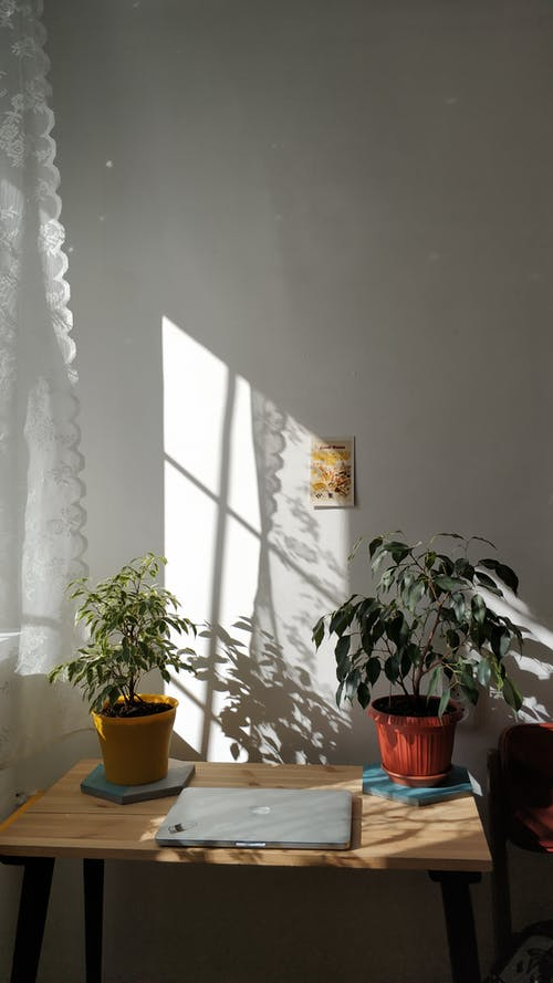 Plants in yellow and terracotta pots on wooden table with laptop near window with lace curtain against white wall with small picture